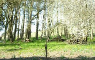Little Mitchellwood, Biggar Spring 2006